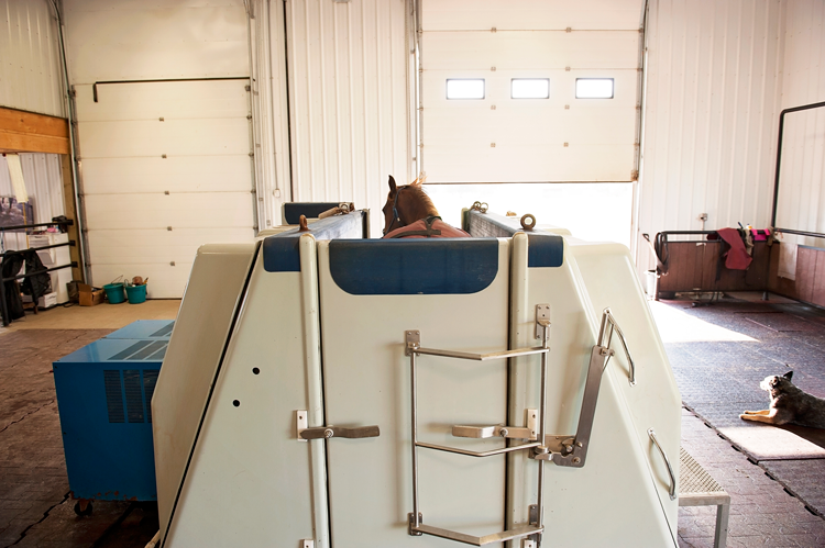 Salt Water Hydrotherapy Coulee Equine
